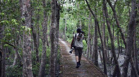 Dünyanın en büyük mangrov ormanları