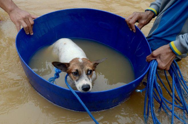 Selde mahsur kalan bir köpek de böyle kurtarıldı.