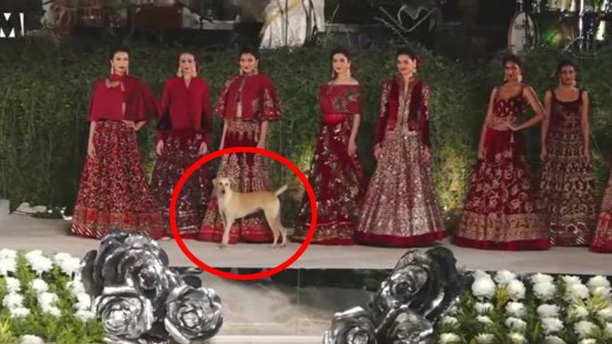 Tasarımcı Rohit Bal defilesine sokak köpeği damga vurdu