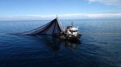 Balıkçıların gözü 'denizlerin prensi'nde