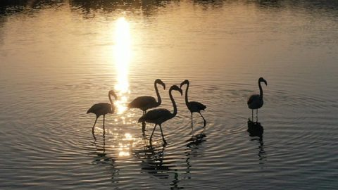 Kuş cennetinin yeni konukları flamingolar bu yıl erken geldi
