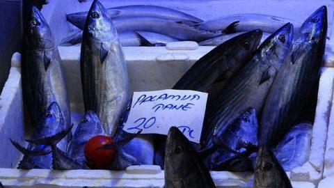 Palamut balığında artık son günler