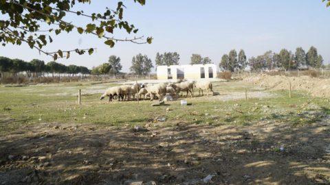 Rehabilitasyon merkezi inşa edilecekti, koyun otlatma yeri oldu