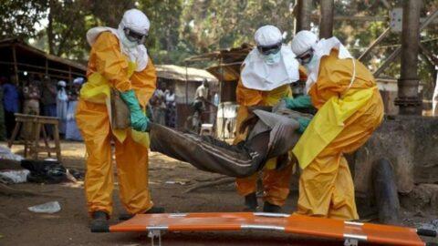 DSÖ Gine'ye komşu 6 ülkeyi uyardı: Ebola salgını riski çok yüksek