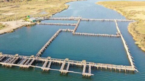 Kültür balıkçılığının lokomotifi Muğla'dan 67 ülkeye balık