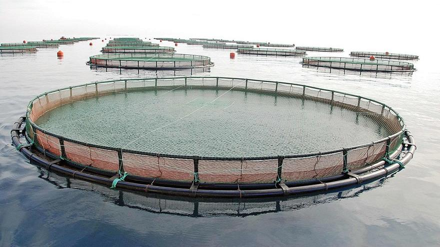 Balık çiftliklerine Danıştay freni