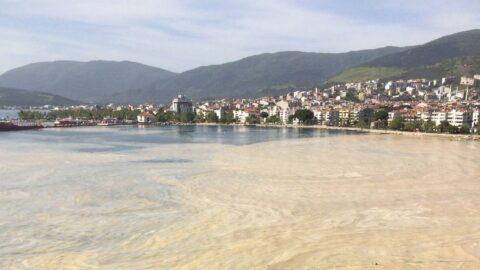 Marmara Denizi'nde deniz salya kabusu