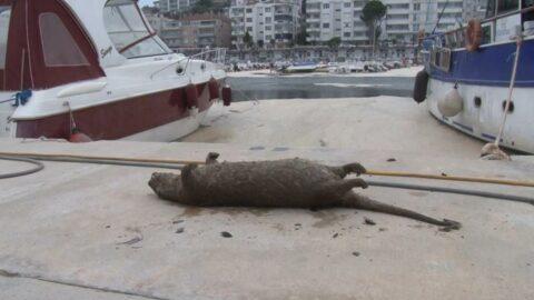 Deniz salyaları canlıların sonu oluyor