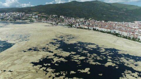 Marmara'da salya araştırması: Dip ölümü tehlikesi var