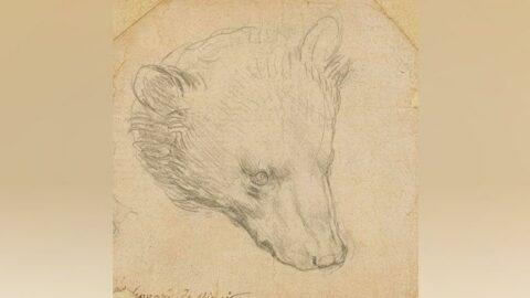 Leonardo da Vinci'nin ayı çiziminin 12 milyon sterline satılması öngörülüyor