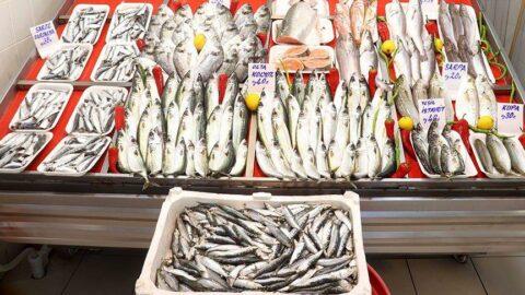 Deniz salyası balıkçıları engelledi, tezgahta çeşit azaldı