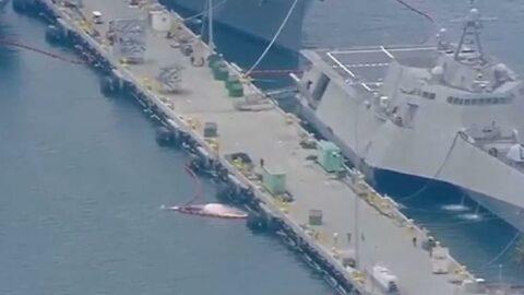 Savaş gemisinin gövdesinden 2 ölü balina çıkartıldı