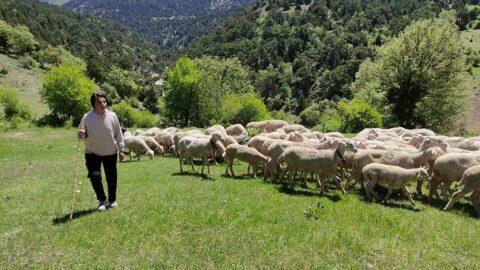 Koyunların peşinde koşarak milli takıma seçildi