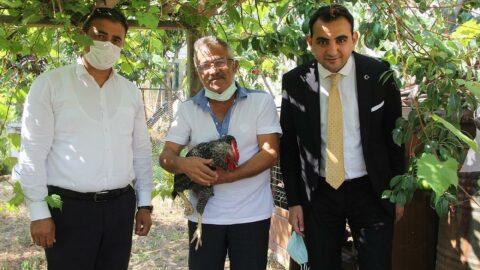 Sinop'ta akıllara durgunluk veren olay! Herkes bu horozu konuşuyor