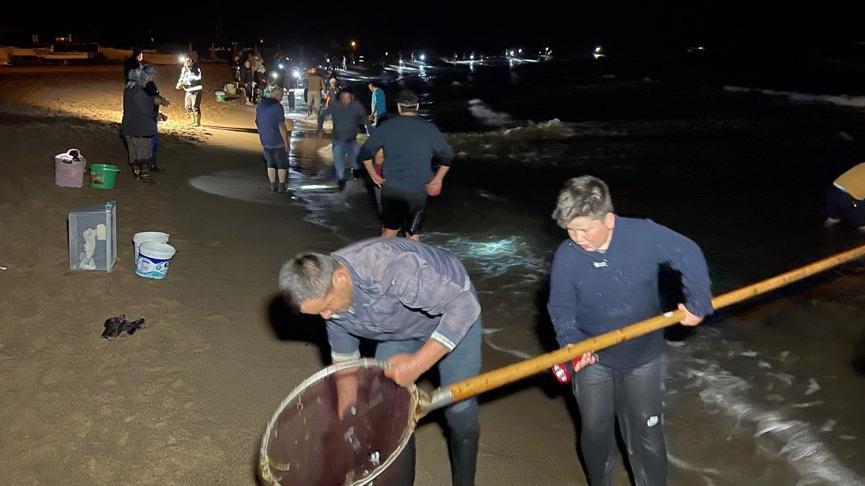 Balıklar kıyıya vurdu, kovalarla sahile koştular