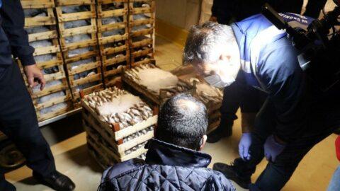 İstanbul'da 25 ton balığa en kondu!