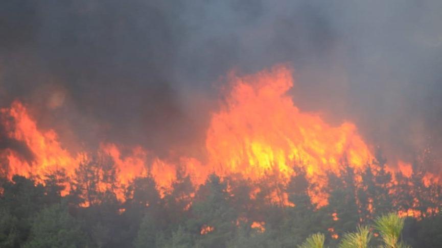 Sayıştay denetçileri: Ormanların yüzde 60'ı yangına hassas alanlar! Bakanlığın yangın eylem planı yok