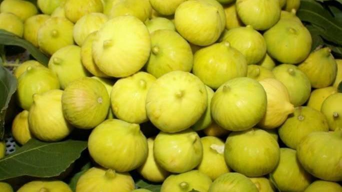 Kuraklık inciri de vurdu: Rekolte kaybı yüzde 70i buldu
