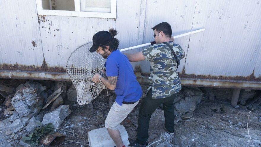 Issız adaya bırakılan yavru kediler kurtarıldı