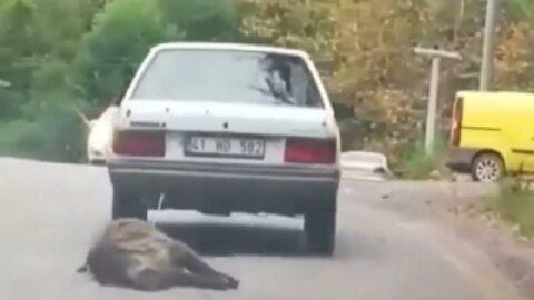 Otomobilinin arkasına bağlayıp sürükledi, sosyal medya ayağa kalktı