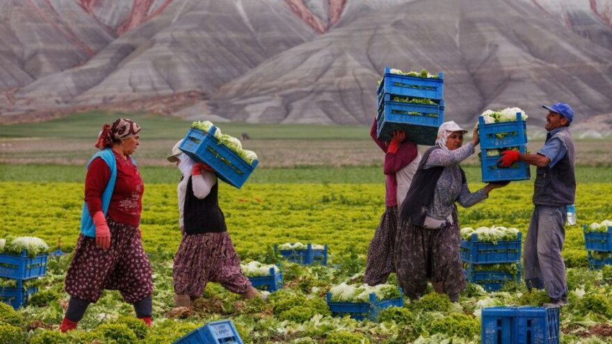 Tarımdaki kopuş sürüyor: Sigortalı çiftçi sayısı 551 bine geriledi