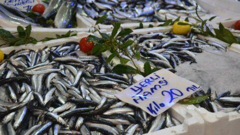 Hamsi avı azaldı fiyatlar iki katına çıktı